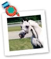 3dRose LLC qs_825_1 Horse - Head of Arab Horse - Quilt Squares