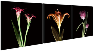 Chic Home Design Tropical 3Pc Set Wrapped Canvas Wall Art