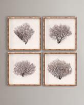 S4 Framed Sea Fans, 4-Piece Set