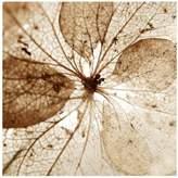 Pottery Barn Dried Hydrangea Flower Framed Print by Lupen Grainne