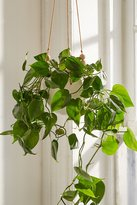 Urban Outfitters Beaded Hanging Planter