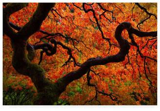 "Chaos Darren White Photography Fall copy Canvas Art - 36.5"" x 48"""