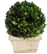 Mills Floral Boxwood Ball Desk Top Plant in Planter