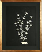 "Serena & Lily ""Underwater Plantlife #1"" by Jennifer Ament"