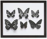 Graham & Brown Botanical Butterflies Framed Print