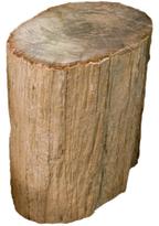 Petrified Wood O