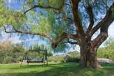 Canvas Art USA Mexico, Tecate Bench swing under large tree by Don Paulson - Giclee Canvas Art Print