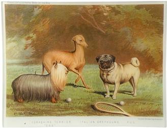John Derian Yorkshire Terrier Italian Greyhound Pug Tray