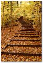 """Fall Stairway"" 24"" x 18"" Canvas Wall Art by Kurt Shaffer"