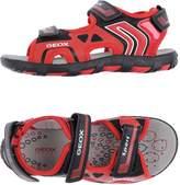 Geox Sandals - Item 11004072