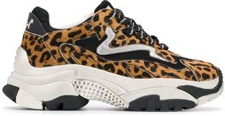 Ash Addict leopard print sneakers