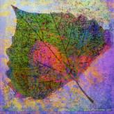 Parvez Taj Cottonwood Leaf 3 Art Print on Canvas