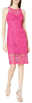 Adrianna Papell Sunrise Lace Illusion Sheath Dress (Bright Azalea) Women's Dress