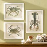 Sea Life Watercolor Prints