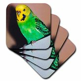 3dRose cst_929_3 Budgie Parakeet-Ceramic Tile Coasters, Set of 4