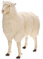 Hansa Sheep