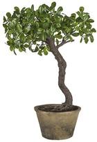 SIA Potted Bonsai Tree