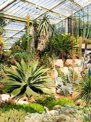 Virgin Experience Days Visit to Kew Gardens and Palace, London with Tea and Cake for Two