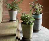 Clay Herb Pots