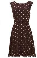 Wallis Brown Polka Dot Fit and Flare Dress