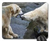 Geevo Polar Bears Ouwehands Dierenpark Rhenen Netherlands Mouse Pad, Mousepad (Bears Mouse Pad)