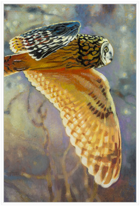 Jonathan Bass Studio Short Eared Owl, Decorative Framed Hand Embellishe