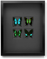 Gloss Swallowtails (Shadow Box Frame)