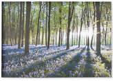 Graham & Brown Bluebell Landscape Canvas Print