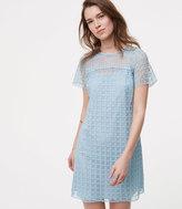 LOFT Petite Mixed Lace Shift Dress