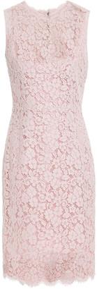Dolce & Gabbana Cotton-blend Corded Lace Dress