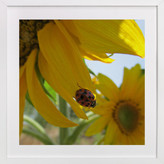 Minted Lady Bug on a Sunflower Petal Art Print