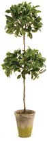 Napa Home And Garden 31'' Ficus Double Topiary Potted
