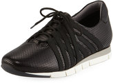 Sesto Meucci Calais Perforated Napa Leather Sneaker, Black