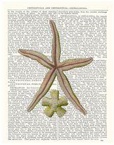 Pottery Barn Starfish Framed Print by Zlatka Paneva