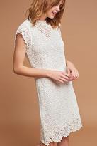 Velvet by Graham & Spencer Allegra Lace Dress