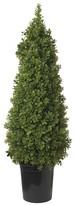 SIA Tall Topiary Boxwood Shrub
