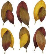 Crate & Barrel Set of 12 Magnolia Scatter Leaves