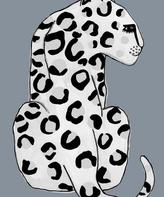 Wonder and Rah Leopard A3 Print