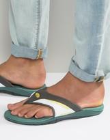 Animal Fader Flip Flops