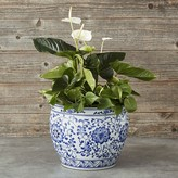 Williams-Sonoma Williams Sonoma Blue & White Ceramic Planter, Extra Large