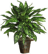 Asstd National Brand Nearly Natural Silver King Silk Plant with Basket