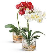 Gump's Phalaenopsis Orchid in Vase