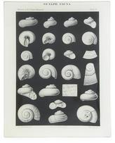 John Derian Shell Fossils #9 Rectangular Tray