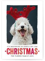 Minted Looks Like Christmas Christmas Photo Cards