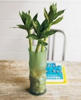 Lucky Lotus Bamboo & Vase