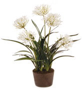Napa Home And Garden 29'' Agapanthus Drop In