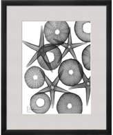 Art.com 'Beach Stars and Sea Urchins Close Up' by Albert Koetsier Framed Graphic Art