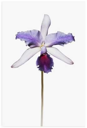 Purple Orchid Wall Art