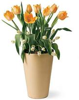 Tulips in Yellow Terra Cotta Pot