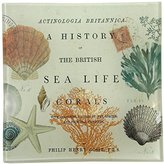 PPD Sea Life Natural History Square Glass Transferware Plate